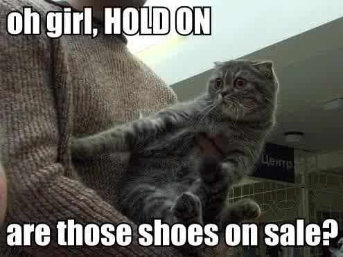 oh_girl_hold_on_are_those_shoes_on_sale_trollcat.jpg